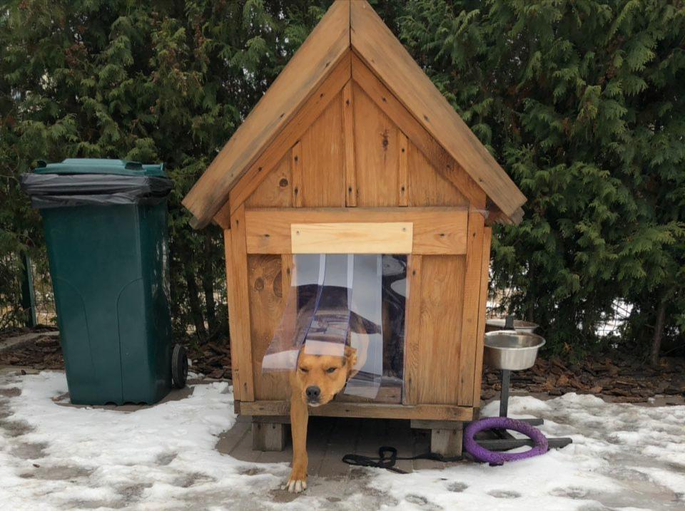Будка для собаки со шторкой